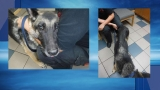 Coventry man faces animal cruelty charges for neglecting dog
