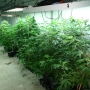 Illegal marijuana grow operation uncovered in Smithfield house