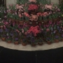 Thousands of flowers on display at George Eastman Museum