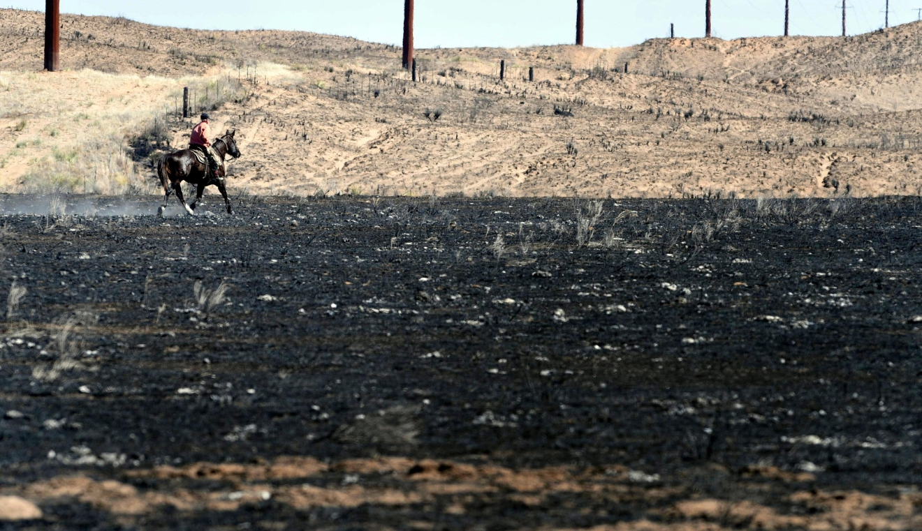 David Crockett, grandfather of the Cody Crockett who died in Monday's wildfires, rides the scorched prairie of Franklin Ranch searching for injured cattle Tuesday, March 7, 2017 after wildfires raced across Gray County, Texas driven by 50 mph winds. Crockett said his grandson and friends got caught in a wild shift the blew the fire back on them, trapping them while herding cattle in a sandy dunes area of the ranch. Cody Crockett, Sydney Wallace and Sloan Everett lost their lives in the wildfires. (Michael Schumacher/The Amarillo Globe News via AP)