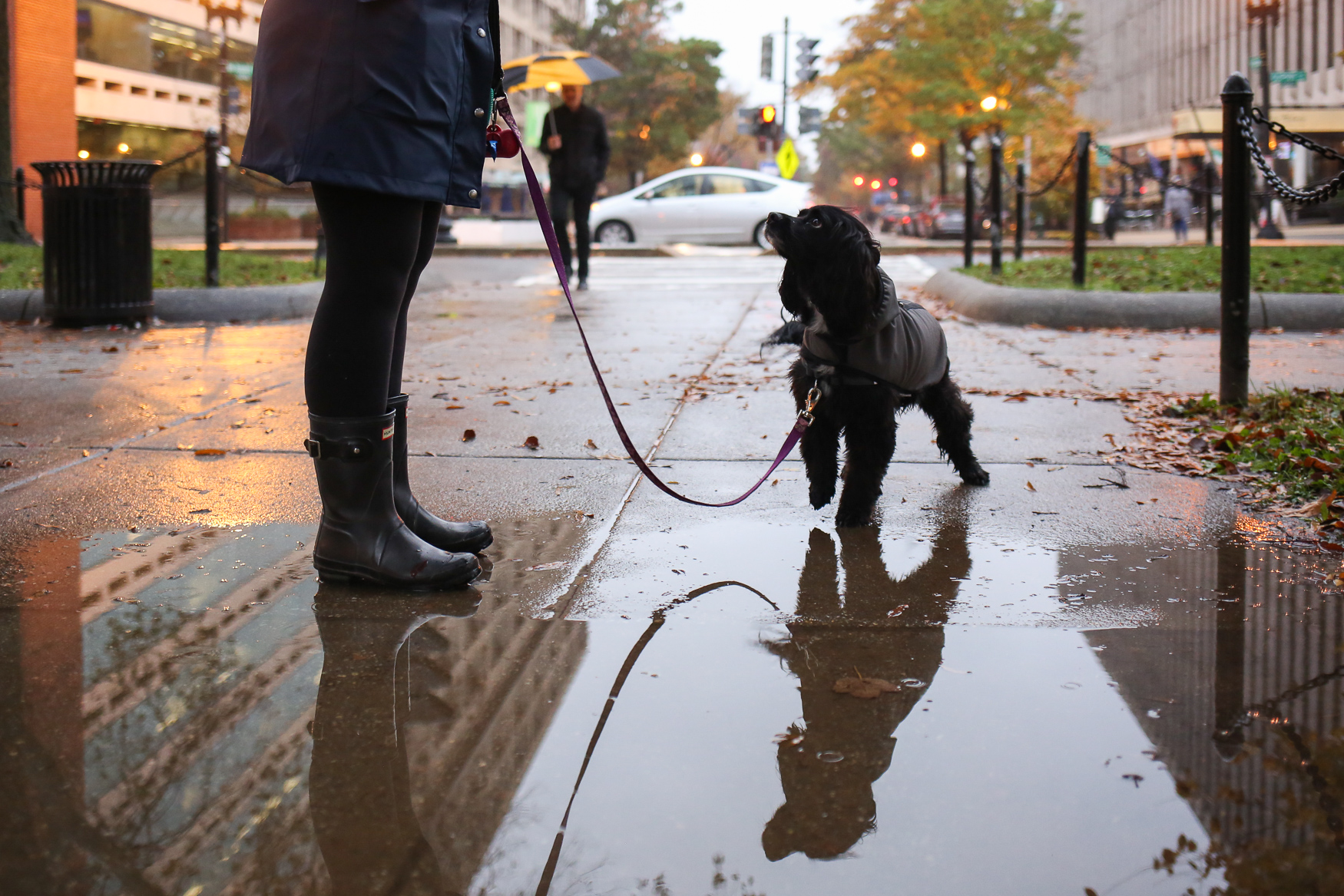 This ladylike pup didn't want to get her paws wet.{ }(Amanda Andrade-Rhoades/DC Refined)