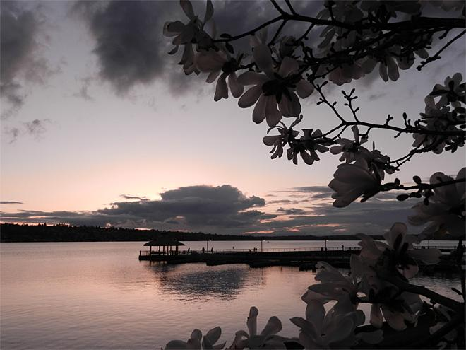Lake Washington Through the Magnolias (Photo Courtesy YouNews contributor: smallos)