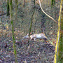 "Deadly deer disease 'worse than normal"" this summer"