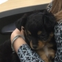 This company is offering 'Pawternity Leave' for employees who adopt new puppies