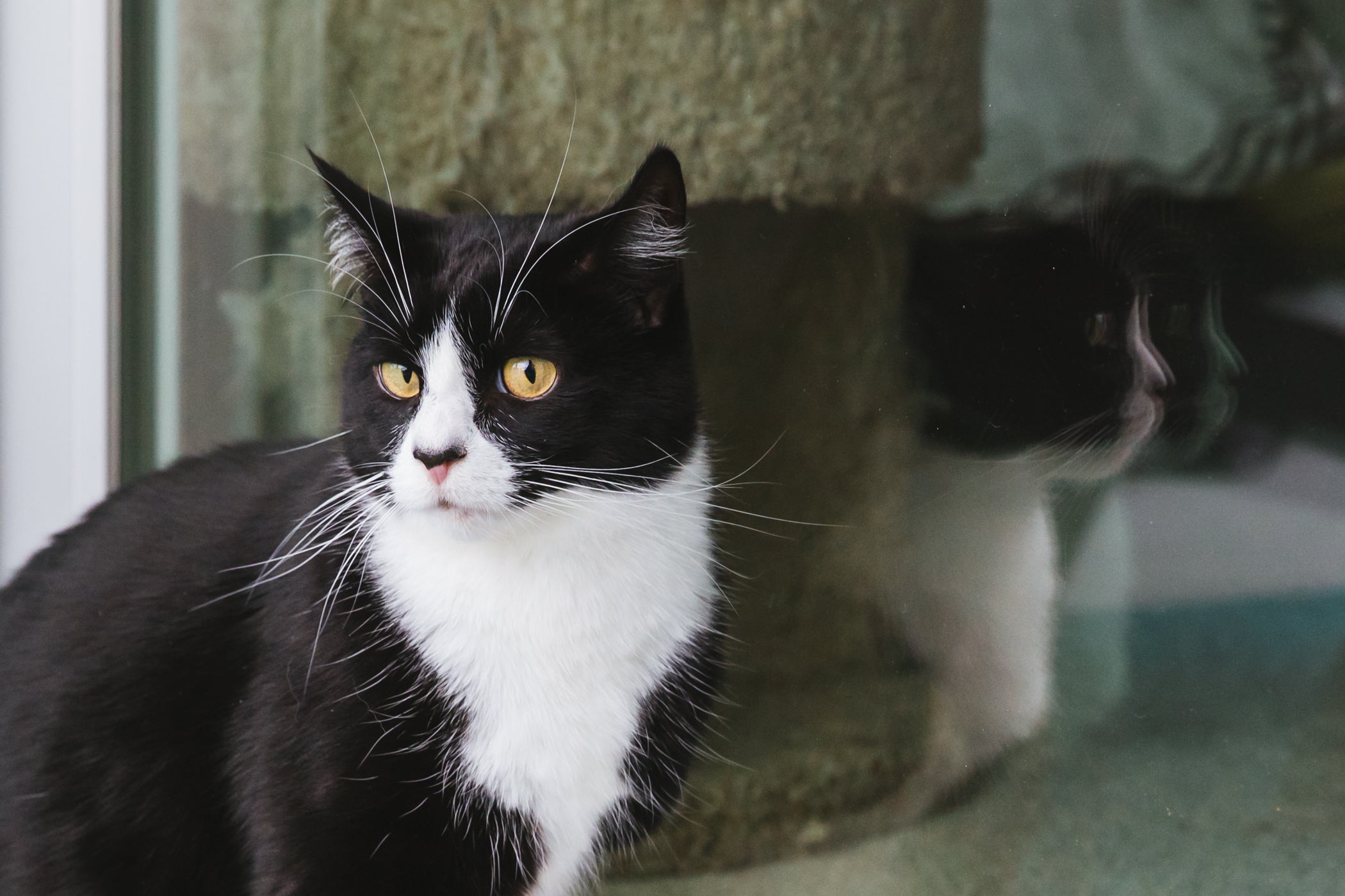 "Miss Dottie is a 6-year-old black and white tuxedo rescue, who loves to play fetch, get brushed and attention but ONLY on her terms. She hates being left alone, and having her meals served late.{&nbsp;}<a  href=""http://seattlerefined.com/ruffined"" target=""_blank"" title=""http://seattlerefined.com/ruffined"">The RUFFined Spotlight</a>{&nbsp;}is a weekly profile of local pets living and loving life in the PNW. If you or someone you know has a pet you'd like featured, email us at{&nbsp;}<a  href=""mailto:hello@seattlerefined.com"" target=""_blank"" title=""mailto:hello@seattlerefined.com"">hello@seattlerefined.com</a>, and your furbaby could be the next spotlighted! (Image: Sunita Martini / Seattle Refined)"
