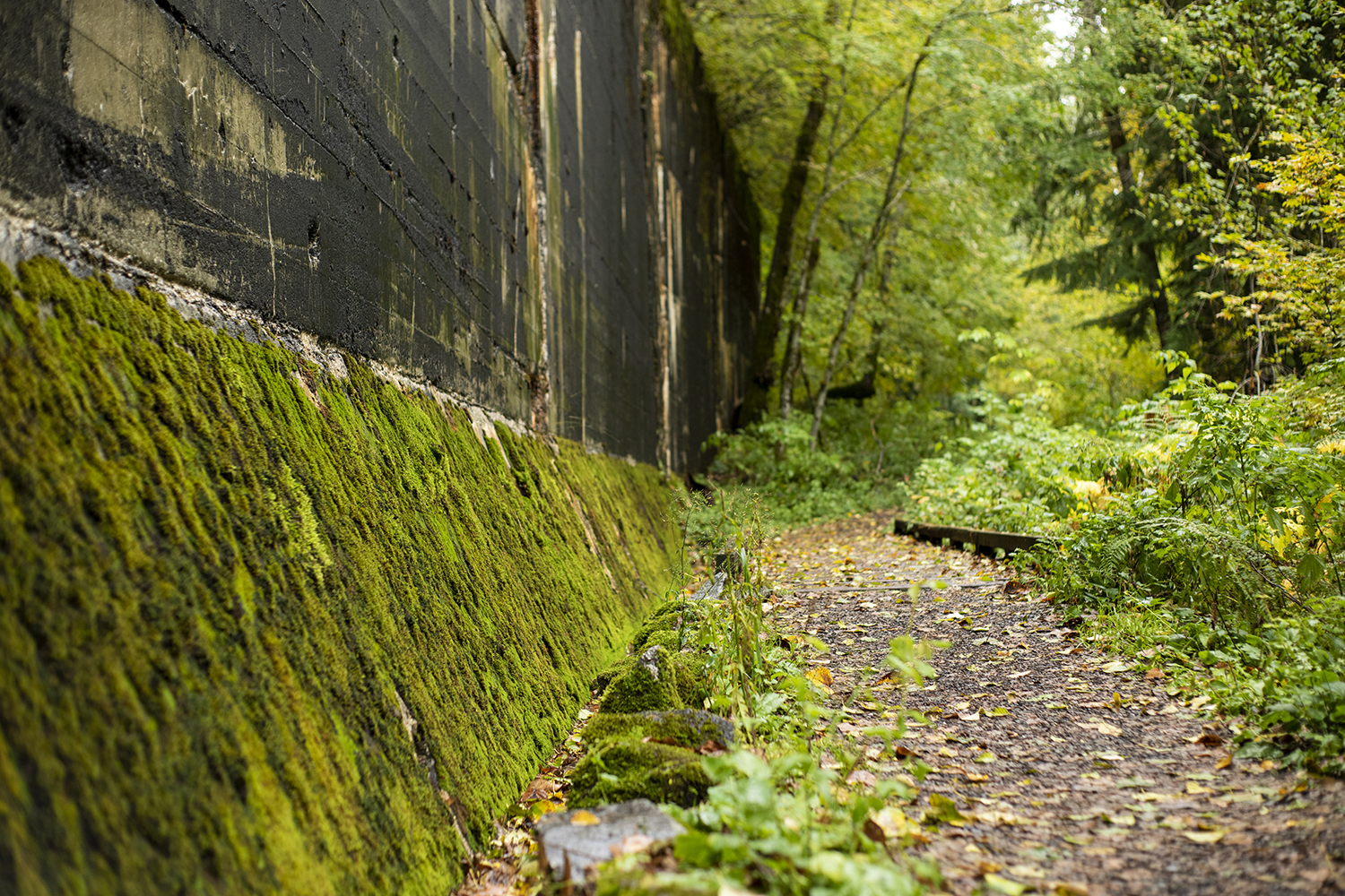 Paths are wide enough for social-distancing and for families and pets looking for a beautiful escape from the city. Early in the hike, a small wooden foot bridge leads visitors beside one of the first cement snow sheds. (Image: Rachael Jones / Seattle Refined)