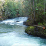 Swimmer disappears in cold, fast-running Olympic Peninsula river