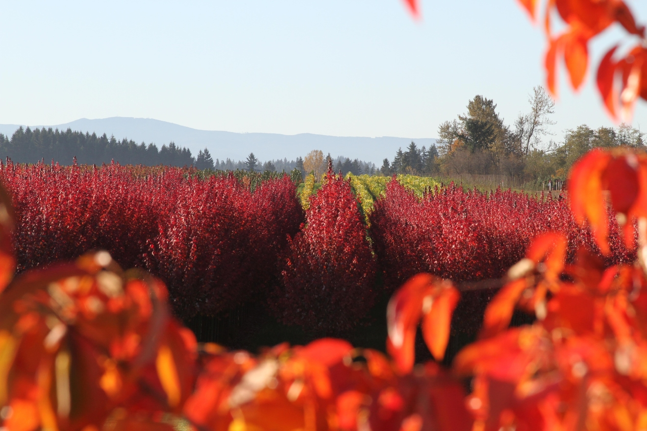 A deciduous nursery in Clackamas County.