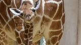 Maryland Zoo names baby giraffe 'Julius' after health struggle