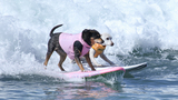 PHOTOS | 10th Annual Surf City Surf Dog competition