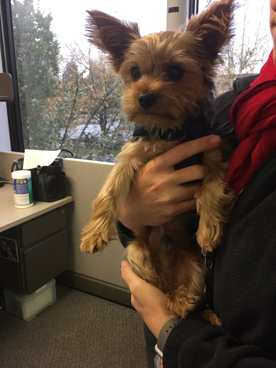 Lost dog found in Beaverton - Photo from Beaverton Police<p></p>