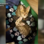 Kittens recovering after being rescued from pond in Phippsburg