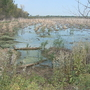 Fight against invasive species shows progress in Green Bay area