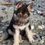 'A puppy forever': Washington rescue creates bucket list for dying puppy