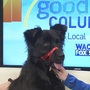 WACH: Adopt! Bring Bailey home with you and enjoy Bark in the Park Saturday