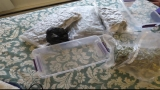 Woman expecting toys by mail claims she received 7 pounds of marijuana instead