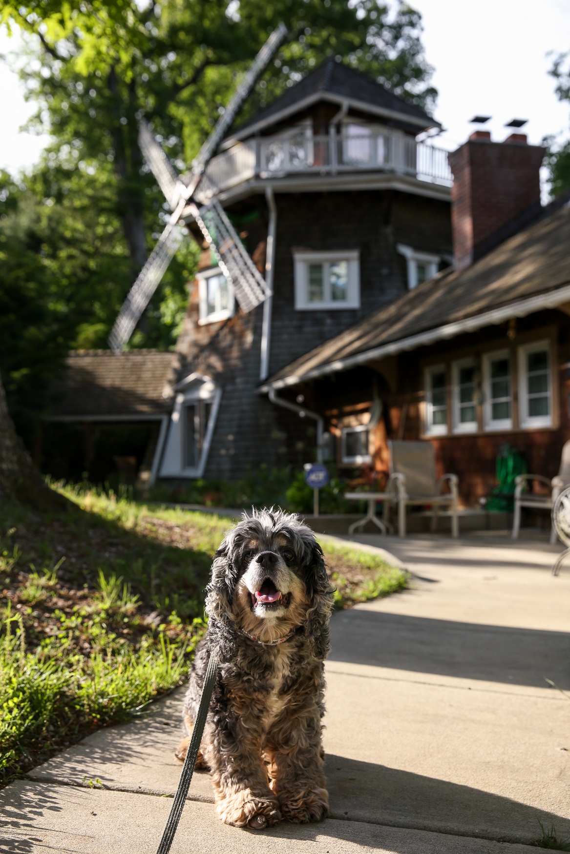 Meet Jensen, a 12.5-year-old Cocker Spaniel. Jensen was adopted from Lucky Dog in Dec. 2009; he will be celebrating his 10th adoptaversary (and 13th birthday) in December. Jensen loves all food (though he's currently o{ } a strict diet) and the very first toy his mom ever got him, Loofie; he still runs around the house with Loofie in his mouth every evening. Although he's now retired, Jensen used to love running agility at Capital Dog Training Club. But his real joy in life, and one of his mom's favorite memories with him, is when he gets to go to{ }C&O Canal and dig in the sand. If you're interested in having your pup featured, drop us a line at aandrade@dcrefined.com, but we do have quite the waiting list right now so we appreciate your patience! (Image: Amanda Andrade-Rhoades/DC Refined)