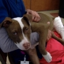 Case under investigation after dog found with broken legs