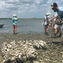 Opening of recreational shellfish season delayed, Irma to blame