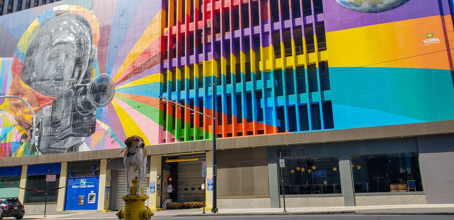 Mollie is a local Instagram celebrity. Famous for posing on fire hydrants in front of ArtWorks murals (and other Cincy landmarks), this hound dog has officially stolen our hearts. You can follow her adventures on Instagram @molliethehounddoggie / Image: Patti Mossey (Mollie's owner and #1 fan) // Published: 5.1.18