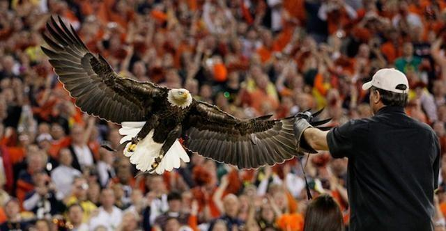 Auburn's War Eagle flies around the stadium during home games. The story of War Eagle dates back to the Civil War. A Confederate soldier found an eagle on a battlefield. The eagle was eventually brought to the first Auburn football game.