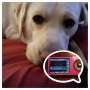 Alert dog for diabetes senses blood sugar drop miles away, warns family
