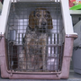 Hound dogs looking for new homes after being tied up, left out in the cold in Virginia