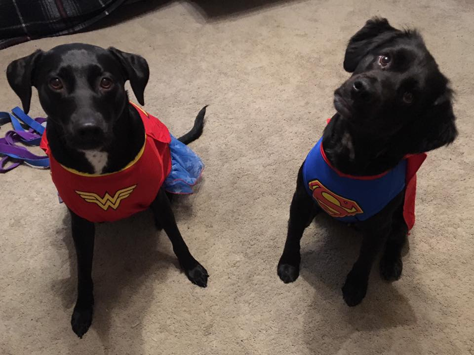 Superman and Wonder Woman Dogs. Submitted by Denise Washburn Mengerink