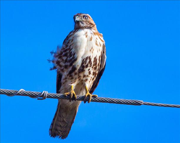 <a  href=&quot;http://share.valleycentral.com/Media/View/3299796&quot;>Hawk</a>