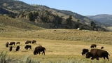 Cellphones spill into Yellowstone's wilds despite park plan