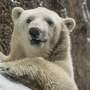 Nora the polar bear meets her new friend at Utah zoo