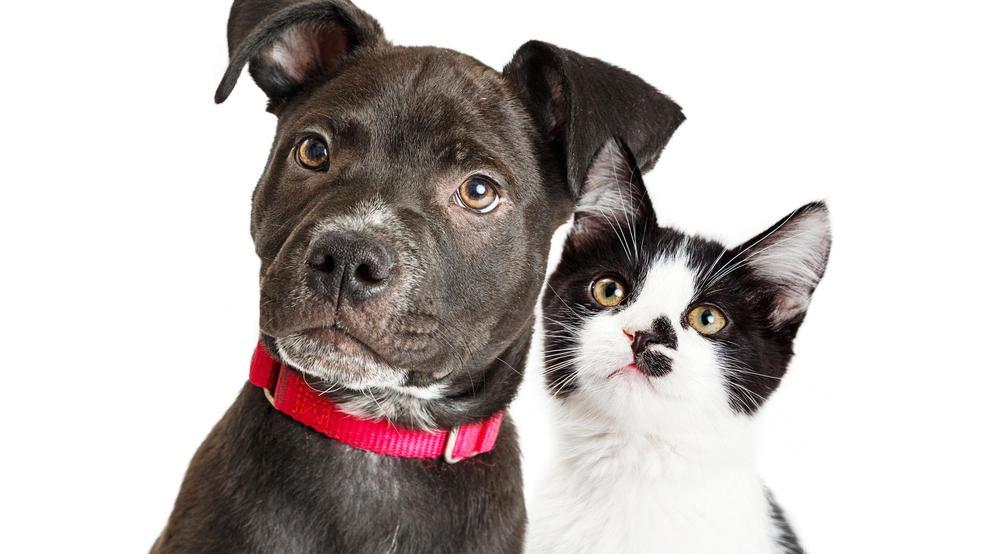 Moncks Corner fundraising event benefiting Berkeley Animal Center