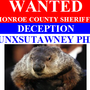 Wanted: Punxsutawney Phil on charges of deception