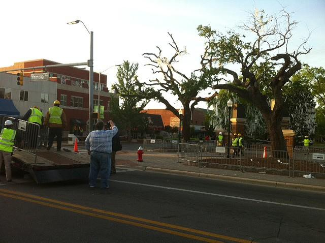 Crews arrive to begin process of removing trees