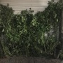 Police find 60 marijuana plants during bust on Charleston's East End