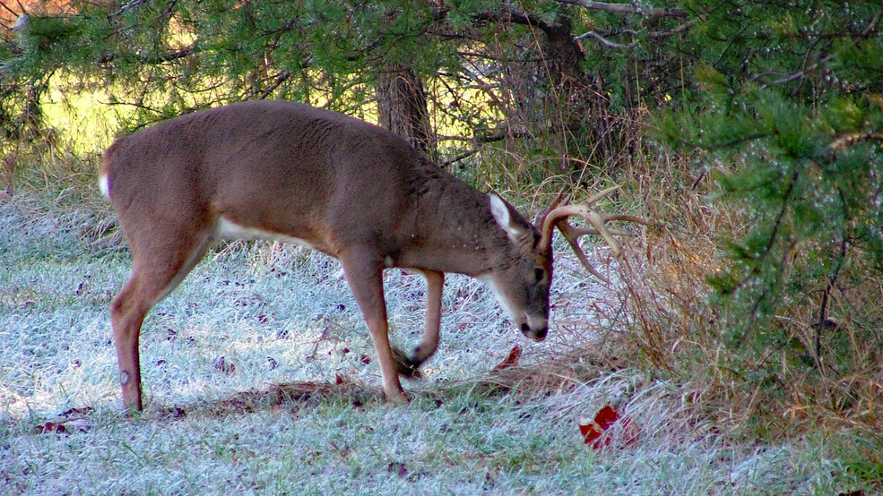 tennessee deer season extended in cwd high risk zone wtvc
