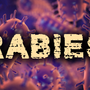 Raccoon with rabies reported in Escambia County