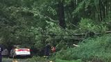 Tree crashes down on car in Brooke County