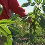 EPA reaches agreement regarding powerful herbicide dicamba