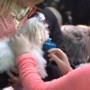 82nd Annual Little Yellow Dog Auction helps give holiday gifts to Siouxland kids