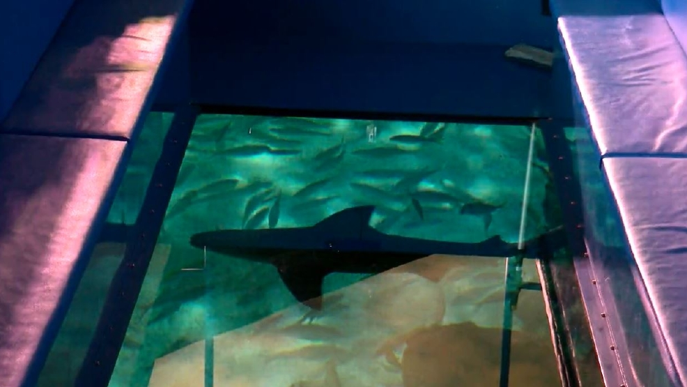 new ripley u0026 39 s aquarium attraction gives new perspective on sharks  sea creatures