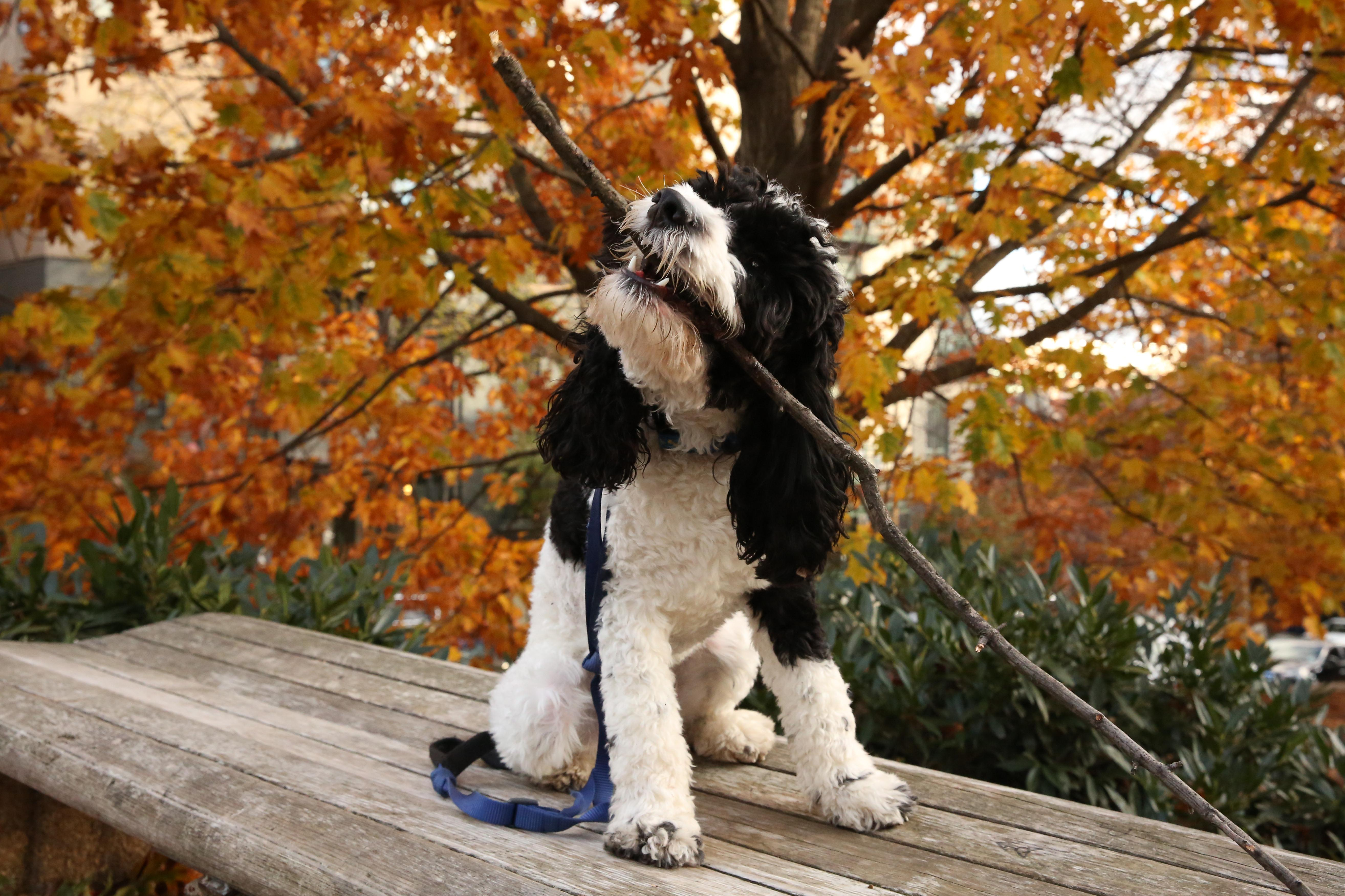 Maybe it's just wishful thinking on our part, but we're hoping fall is just around the corner. Here are some of our favorite dogs from years past that love autumn just as much as we do! If you're interested in having your pup featured, drop us a line at aandrade@dcrefined.com (Amanda Andrade-Rhoades/DC Refined)