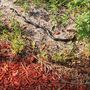 Snake sightings up in Palm Beach County following heavy rainfall