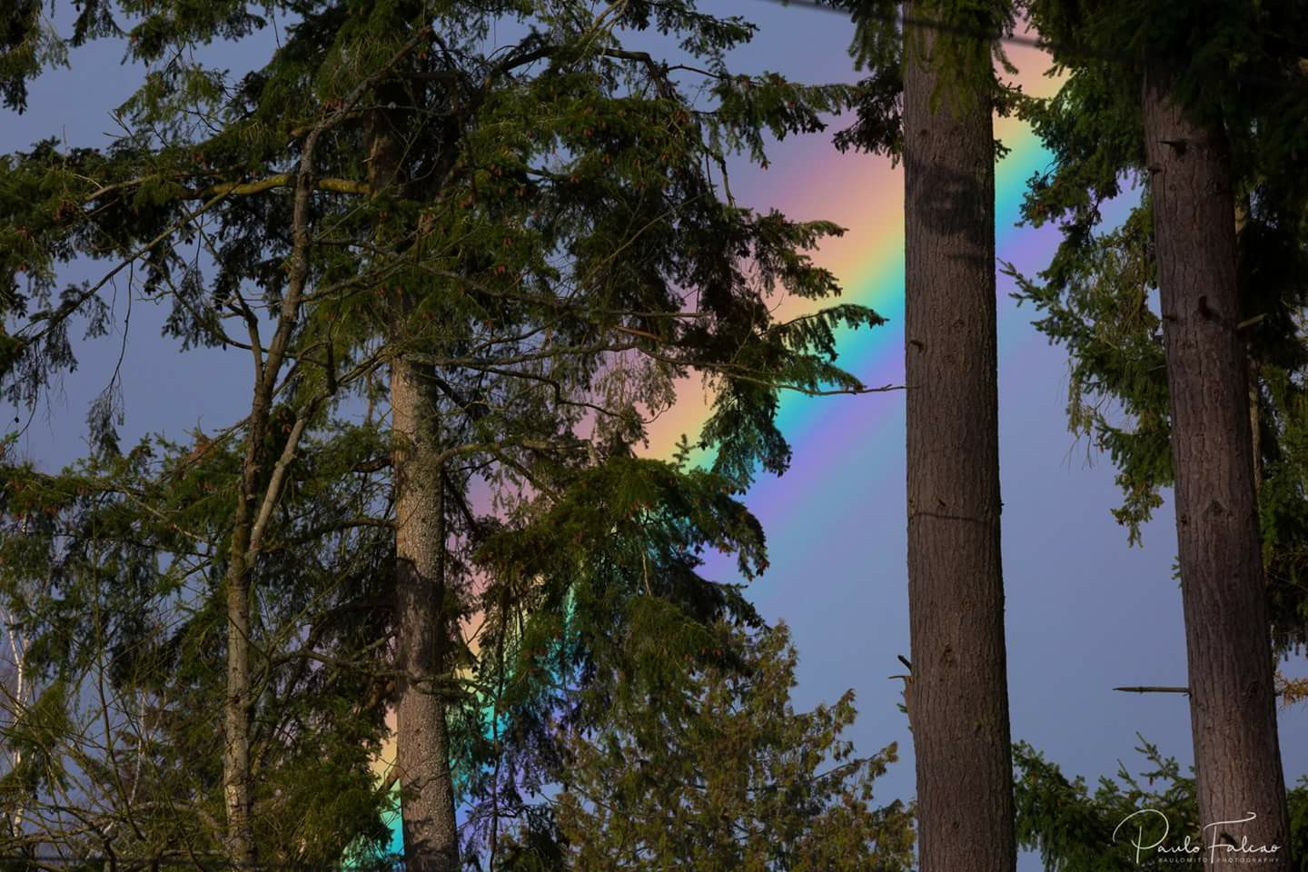 A rainbow is hidden in the trees in Lynnwood, Wash., Tuesday, April 18, 2017. (Photo: Poulomito Photography)