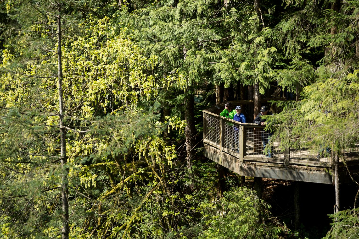 Built in 1889, Capilano Suspension Bridge is Vancouver's oldest attraction. The sturdy bridge hangs 230 feet above Capilano River and is 450 feet long. After crossing, guests can explore a series of seven suspension bridges built high in the trees or cliffwalk, a cliff-side path that takes visitors on a connected series of suspended walkways jutting out from a granite cliff face high above the Capilano River. During summer weekends, Raptors Ridge Birds of Prey bring their rehabilitated hawks, falcons, and owls for visitors to learn more about the surrounding wildlife. (Sy Bean / Seattle Refined)