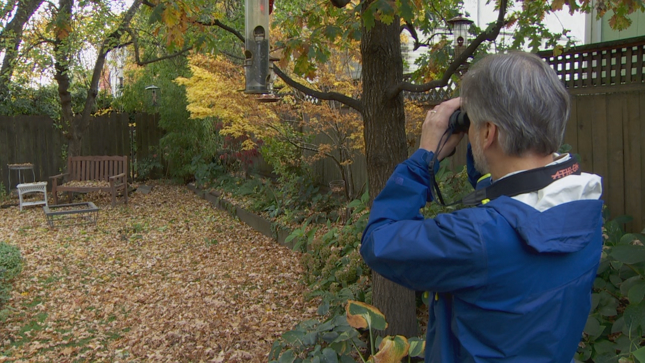 Portland has a wealth of bird-watching opportunities at parks and refuges - but the best place to start is in your own backyard. (KATU)
