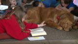 Abused dog gets new chance at life as therapy dog