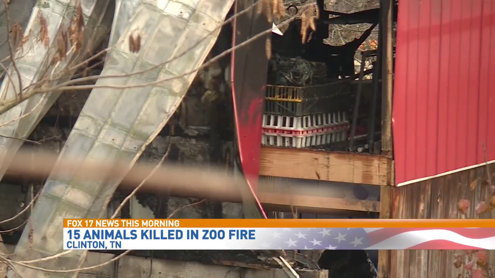 Animals Killed Workers Firefighter Hurt In Tennessee Zoo