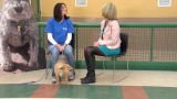 Nevada Humane Society: Camo the puppy