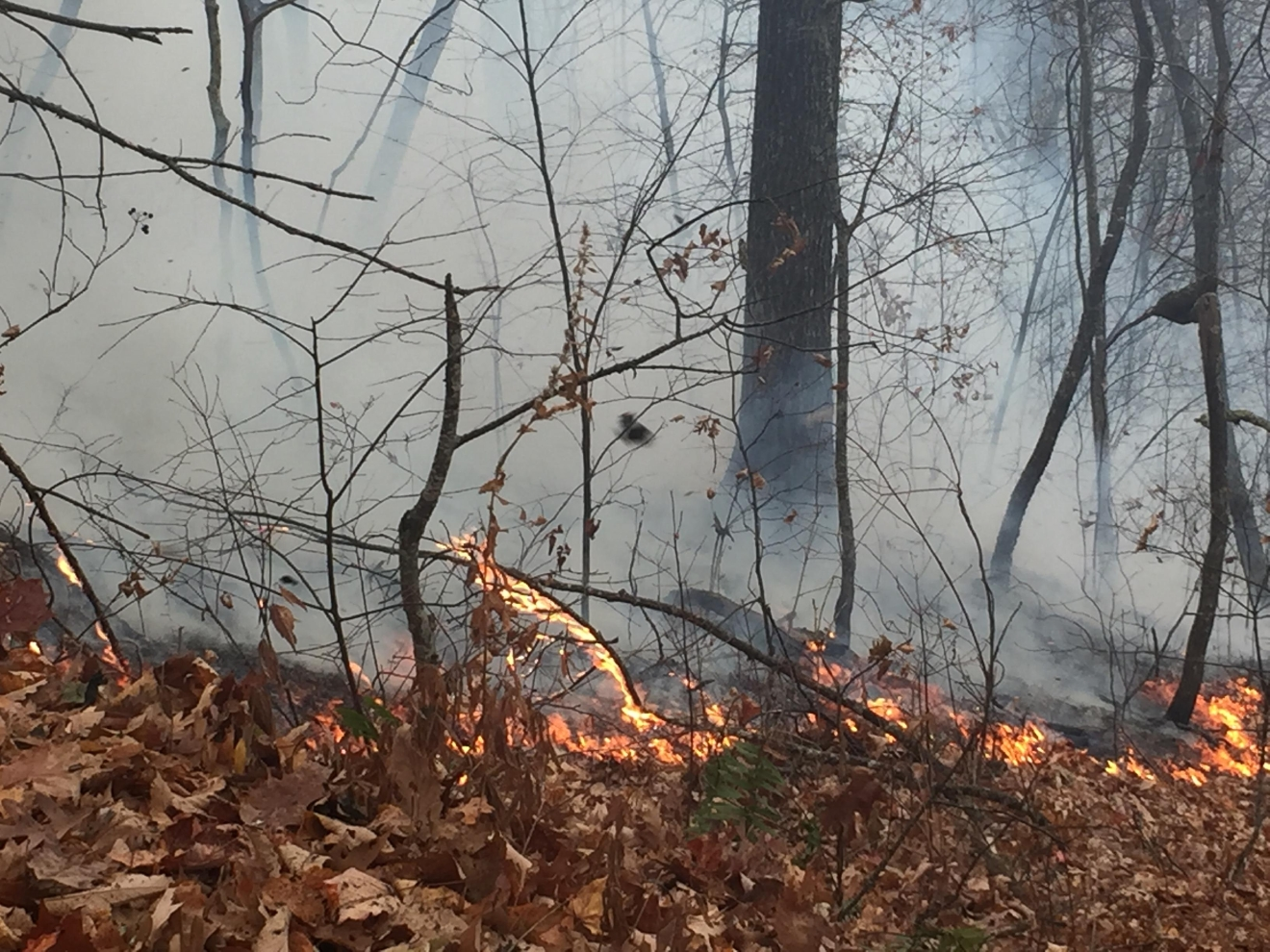 Crews are fighting a new wildfire that broke out overnight off Pisgah Highway, near Upper Hominy. (Photo credit: WLOS staff)